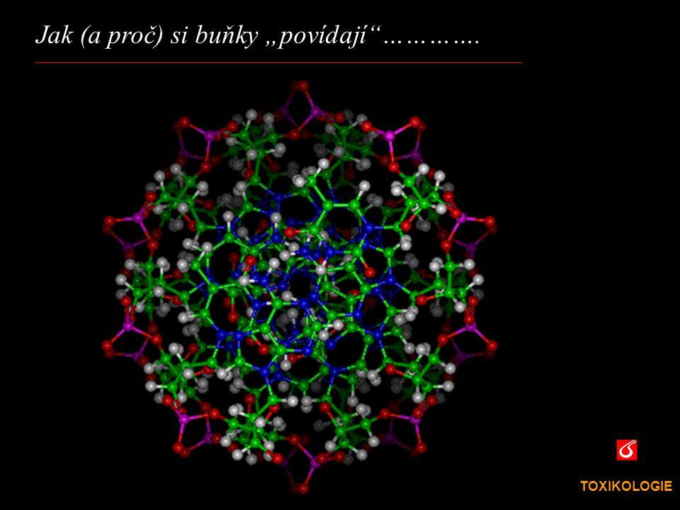 TOXIKOLOGIE VŠCHT Praha mitochondrie