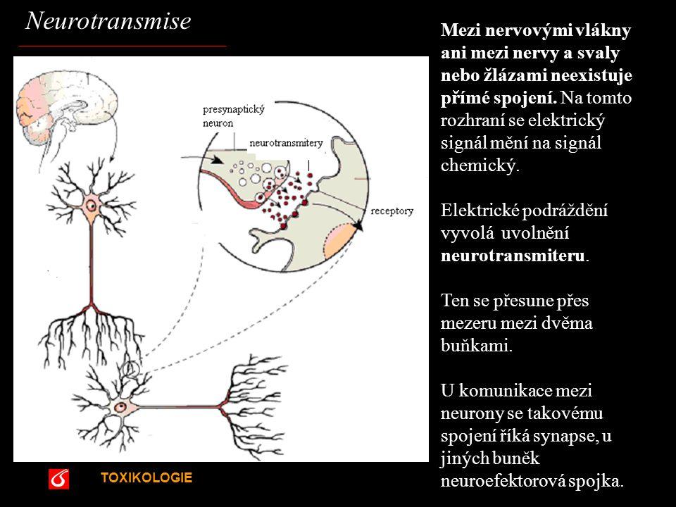 TOXIKOLOGIE Neurotransmise Mezi nervovými vlákny ani mezi nervy a svaly nebo žlázami neexistuje přímé spojení. Na tomto rozhraní se elektrický signál