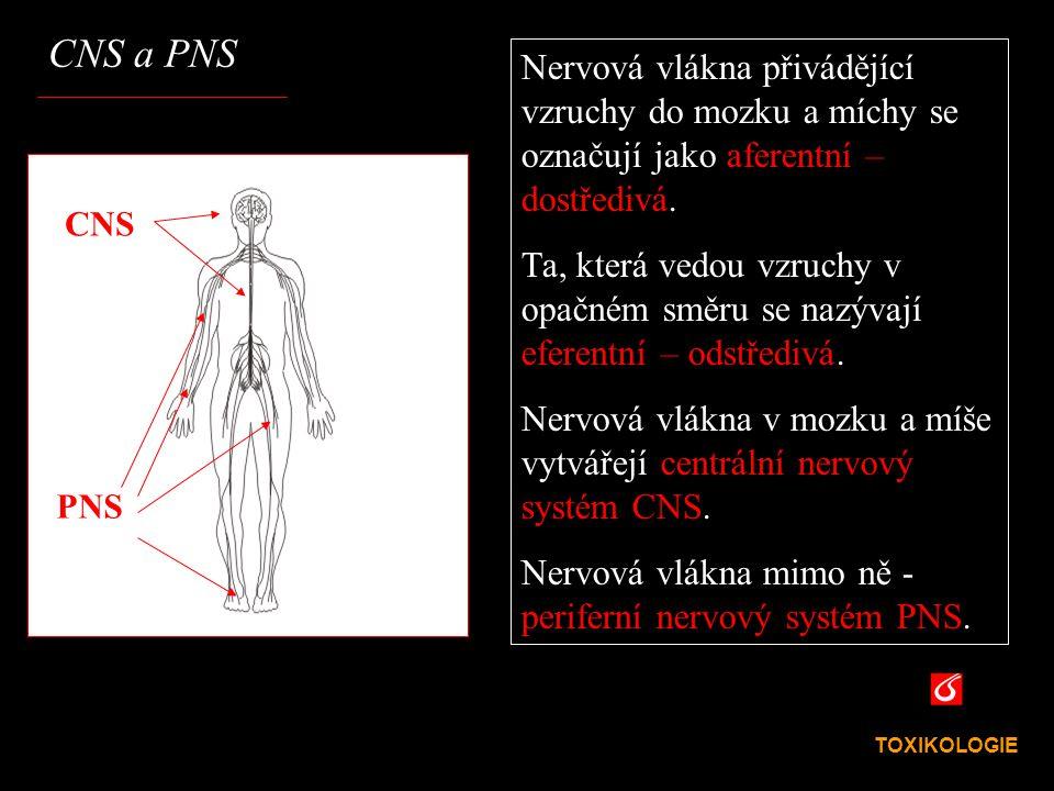 VŠCHT Praha CNS a PNS TOXIKOLOGIE Nervová vlákna přivádějící vzruchy do mozku a míchy se označují jako aferentní – dostředivá. Ta, která vedou vzruchy