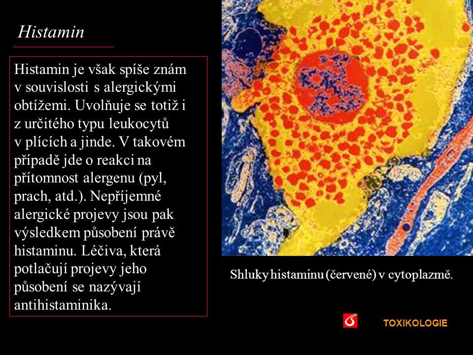 TOXIKOLOGIE VŠCHT Praha Histamin Shluky histaminu (červené) v cytoplazmě. Histamin je však spíše znám v souvislosti s alergickými obtížemi. Uvolňuje s