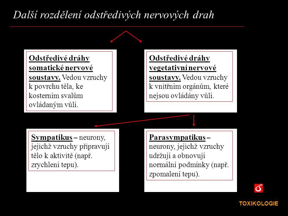 VŠCHT Praha Další rozdělení odstředivých nervových drah TOXIKOLOGIE Odstředivé dráhy somatické nervové soustavy. Vedou vzruchy k povrchu těla, ke kost