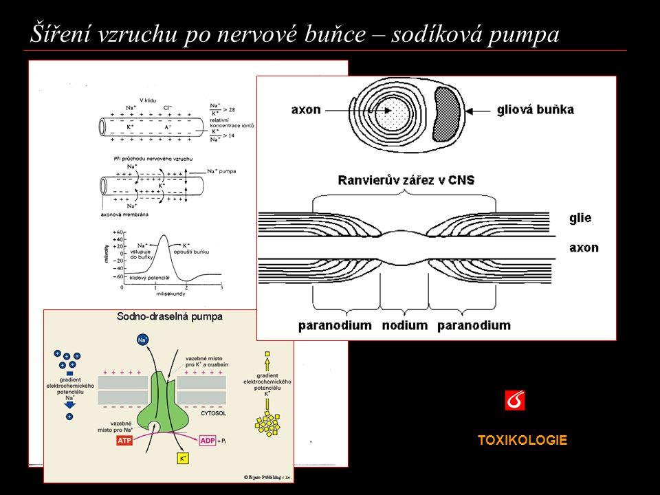 TOXIKOLOGIE VŠCHT Praha Šíření elektrického vzruchu – sodíková pumpa K podráždění nervové buňky dojde v závislosti na místních změnách v koncentraci některých iontů a nervových přenašečů.