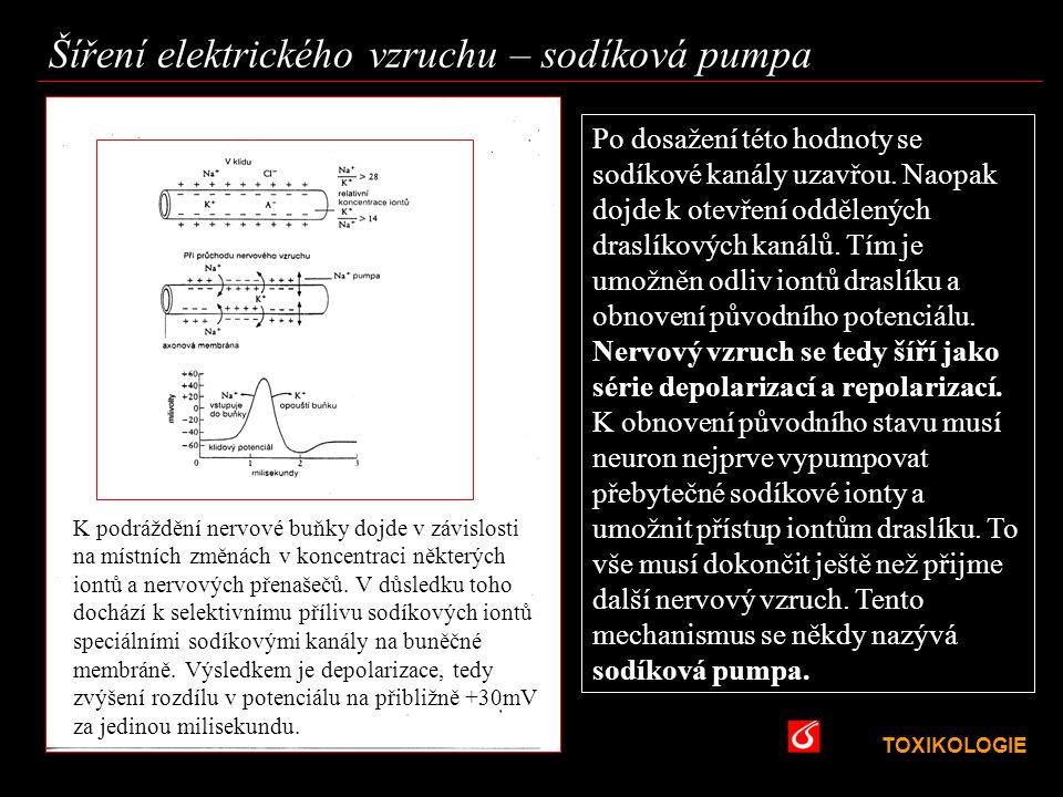 TOXIKOLOGIE VŠCHT Praha Šíření elektrického vzruchu – sodíková pumpa K podráždění nervové buňky dojde v závislosti na místních změnách v koncentraci n