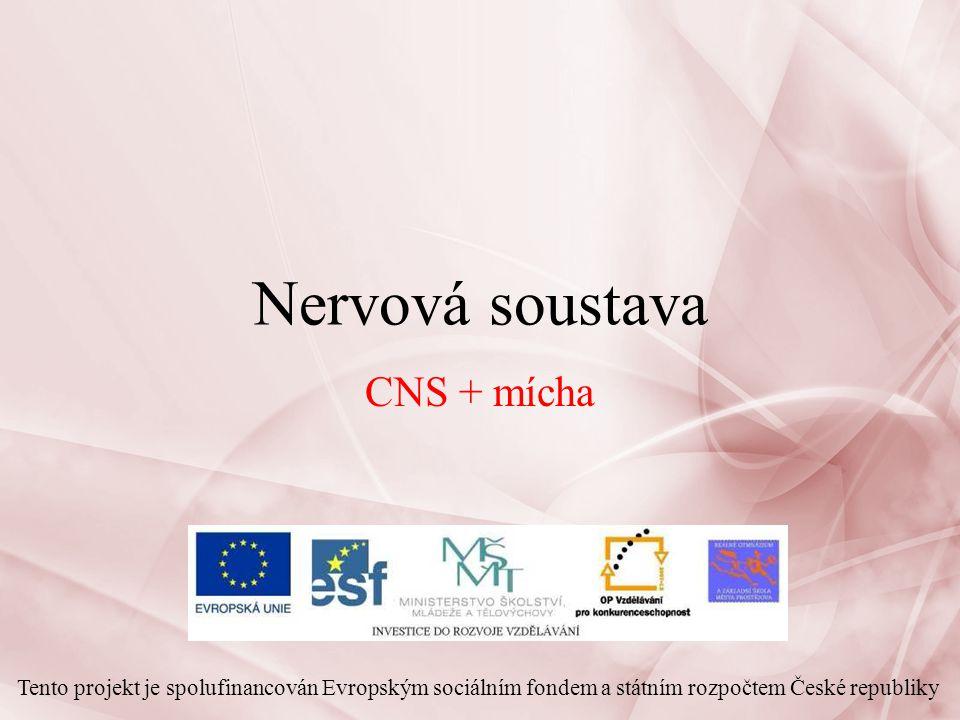 Nervová soustava 2 Nervová soustava: – řídí přímo činnost všech orgánů v těle a jejich vzájemnou koordinaci nervové zakončení, neurohormony tzn.