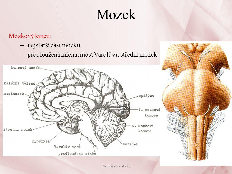Prodloužená mícha Prodloužená mícha(medulla oblongata): – plynulé pokračování míchy hřbetní – délka 2 - 2,5 cm, vystupuje z ní 7 párů mozkových nervů – centrum reflexní činnosti: dýchací reflexy – kašel, kýchání srdeční reflexy – činnost srdce, krevní tlak sací reflex polykací reflex zvracivý reflex slinění – uvnitř je IV.