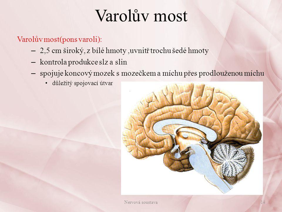 Mozeček Mozeček(cerebellum): – uložen nad prodlouženou míchou a Varolovým mostem – skládá se z dvou polokoulí (hemisfér) – hemisféry spojeny červem mozečkovým – na povrchu - šedá kůra mozečková: silně zbrázděna v závity Purkyňovy buňky = největší a nejsložitější buňky v lidském těle, každá se spojuje se statisíci ostatních mozkových buněk – uvnitř bílá hmota – společně vytváří tzv.