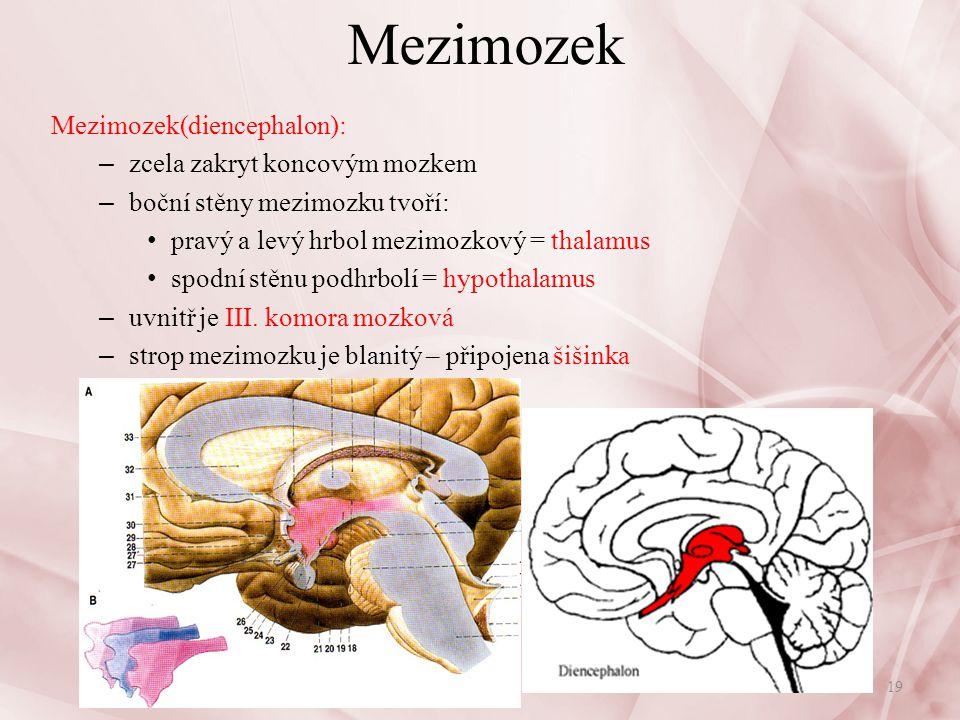 Mezimozek thalamus: – oboustranně spojen z mozkovou kůrou převádí vzruchy z nižších pater CNS – příjem všech smyslových informací: brána vědomí, pocit vlastního já; všechny vzruchy, které vnímáme jako pocity – poškození: poruchy vnímání - ztráta citlivosti nebo prudké bolesti hypothalamus: – nejvyšší reflexní centrum pro řízení činnosti vnitřních orgánů – nadřazený prodloužené míše, endokrinní žláza = hypofýza – funkce: řídí termoregulaci, hospodaření s vodou, tkáňový metabolismus, dýchání, krevní oběh, krvetvorbu, neurosekreci, homeostázu centra sytosti a hladu(poruchy výživy), TK, rozmnožování - sexuální chování mobilizace pro zátěžové(stresové) reakce – (útočné, obranné reakce) hypofýza – propojení nervové a humorální činnosti (viz.