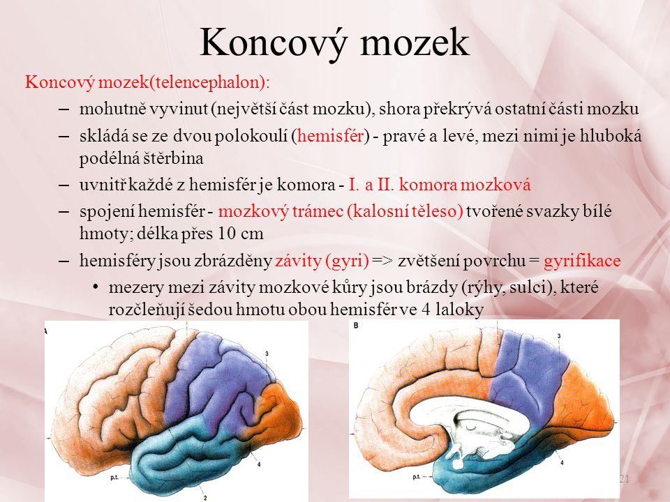 hlavní funkce jednotlivých laloků: – lalok čelní: motorická oblast, ovládá pohyb, myšlení, řeč – lalok temenní: oblast senzorická, centrum kožní citlivosti, hmatu, chuti, pro signály z receptorů kožních a svalových – lalok spánkový oblast senzorická, centrum sluchu, čichu – lalok týlní: oblast senzorická, centrum zrakové = vizuální korová oblast Koncový mozek 22Nervová soustava