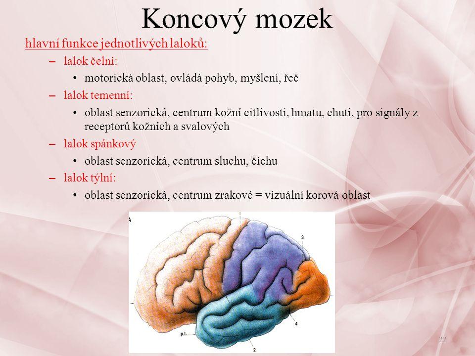 Koncový mozek Kůra mozková: – nejstarší kůra mozku = allokortex, kůra neopalia = neokortex – 2-8mm, 6 vrstev nervových buněk, plocha 2200cm 2 – řídí veškerou činnost organismu, je sídlem vyšší nervové činnosti zachycení, rozlišení, seskupení – analyticko-syntetická činnost – zajišťuje odpověď organismu na změny zevního nebo vnitřního prostředí korové analyzátory: – čichový, chuťový, zrakový, sluchový, kožní citlivosti, motorický – motorická oblast řeči - Brocovo centrum – senzitivní centrum řeči (Wernickeova oblast) Brocovo centrum: – řídí jemné a přesné pohyby mluvidel při výkonu řeči – poškozené = neschopnost vyjádřit myšlenky mluvenou řečí (motorická afázie) Nervová soustava23