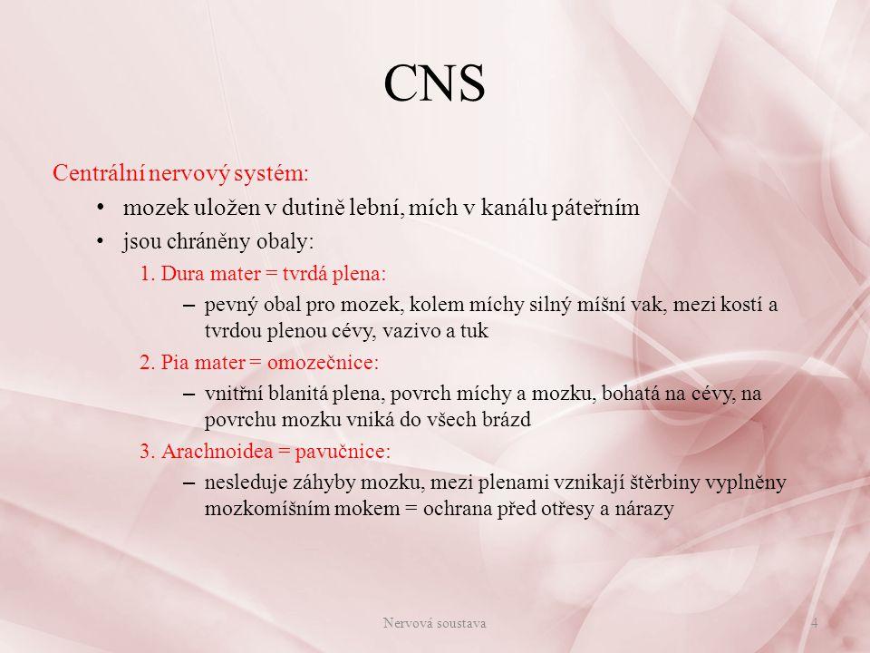 Obaly CNS Nervová soustava5
