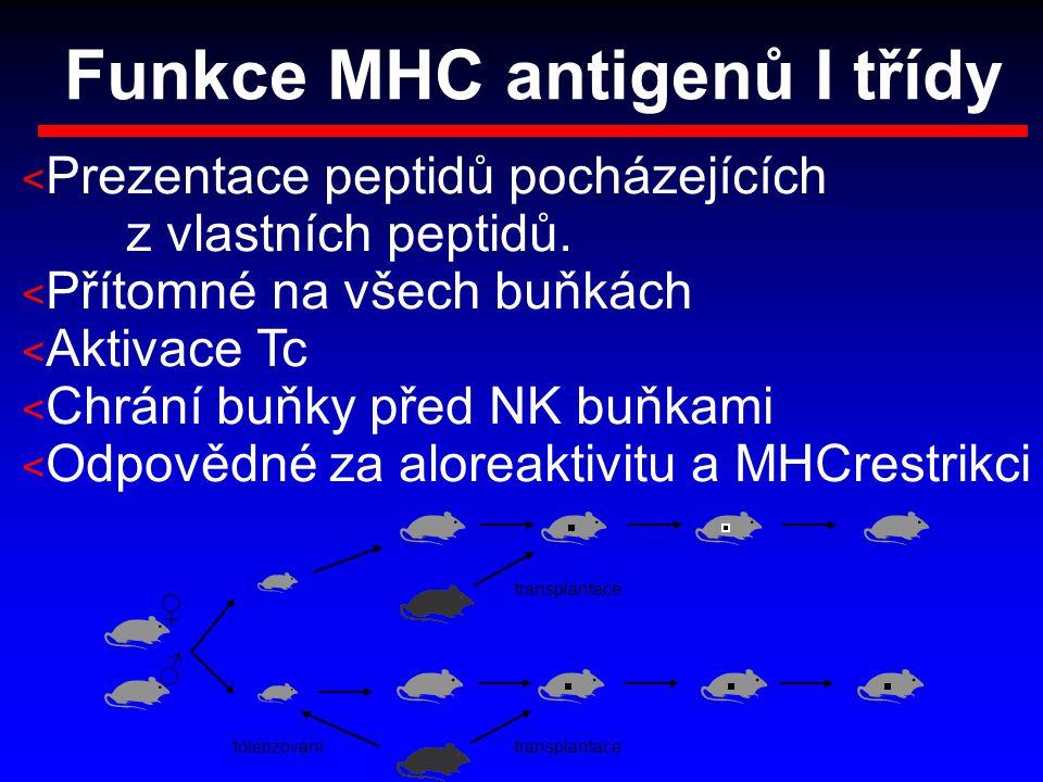 Funkce MHC antigenů I třídy < Prezentace peptidů pocházejících z vlastních peptidů. < Přítomné na všech buňkách < Aktivace Tc < Chrání buňky před NK b