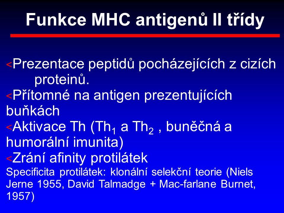 Funkce MHC antigenů II třídy < Prezentace peptidů pocházejících z cizích proteinů. < Přítomné na antigen prezentujících buňkách < Aktivace Th (Th 1 a