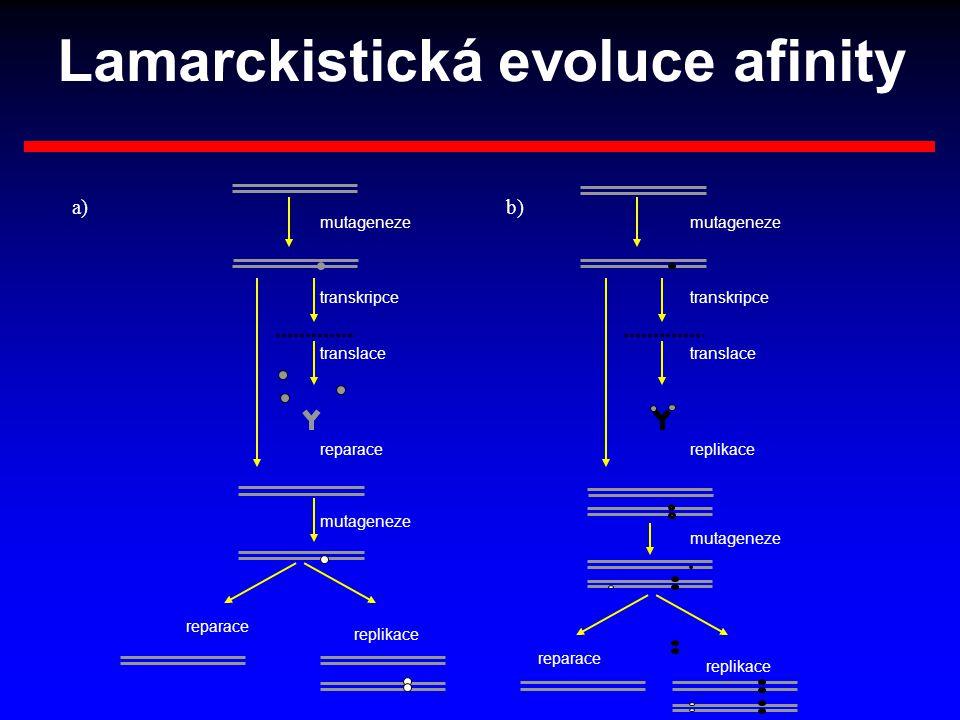 mutageneze reparace transkripce translace mutageneze replikace transkripce translace reparace replikace reparace replikace a)b) Lamarckistická evoluce