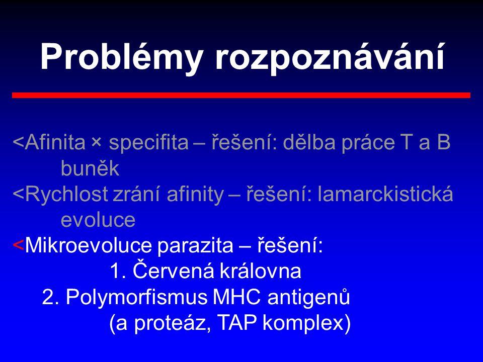 Problémy rozpoznávání <Afinita × specifita – řešení: dělba práce T a B buněk <Rychlost zrání afinity – řešení: lamarckistická evoluce <Mikroevoluce pa