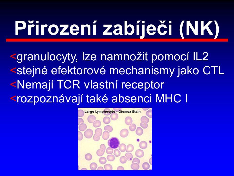 Přirození zabíječi (NK) <granulocyty, lze namnožit pomocí IL2 <stejné efektorové mechanismy jako CTL <Nemají TCR vlastní receptor <rozpoznávají také a