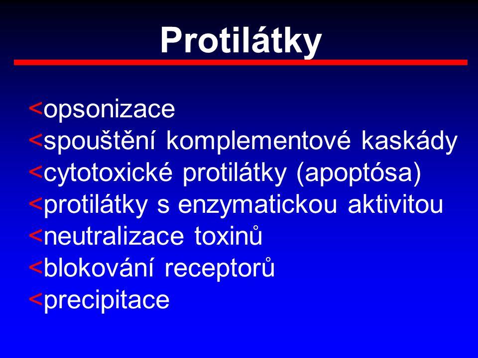 Protilátky <opsonizace <spouštění komplementové kaskády <cytotoxické protilátky (apoptósa) <protilátky s enzymatickou aktivitou <neutralizace toxinů <