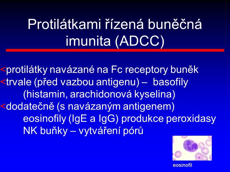 Protilátkami řízená buněčná imunita (ADCC) <protilátky navázané na Fc receptory buněk <trvale (před vazbou antigenu) – basofily (histamin, arachidonov