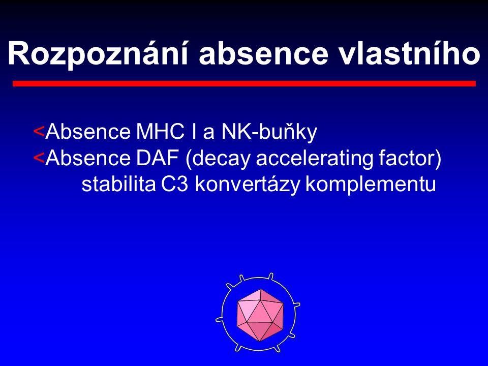 Rozpoznání absence vlastního <Absence MHC I a NK-buňky <Absence DAF (decay accelerating factor) stabilita C3 konvertázy komplementu