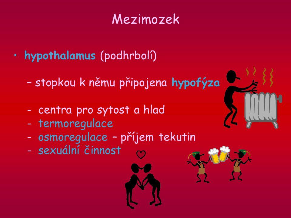 hypothalamus (podhrbolí) – stopkou k němu připojena hypofýza - centra pro sytost a hlad - termoregulace - osmoregulace – příjem tekutin - sexuální činnost Mezimozek