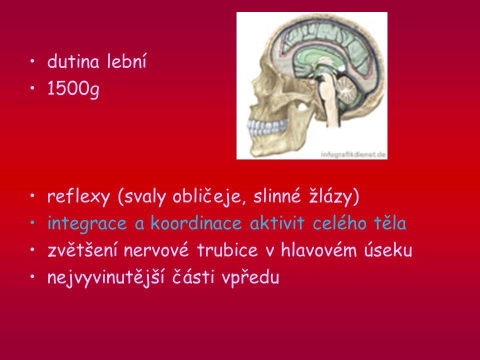 dutina lební 1500g reflexy (svaly obličeje, slinné žlázy) integrace a koordinace aktivit celého těla zvětšení nervové trubice v hlavovém úseku nejvyvinutější části vpředu