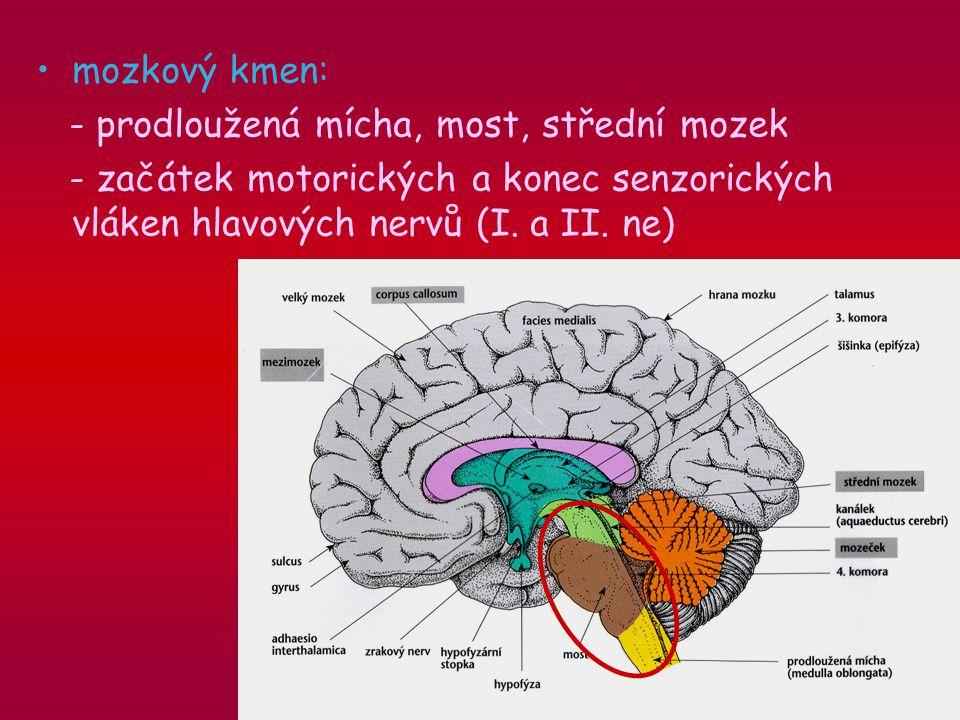 mozkový kmen: - prodloužená mícha, most, střední mozek - začátek motorických a konec senzorických vláken hlavových nervů (I.