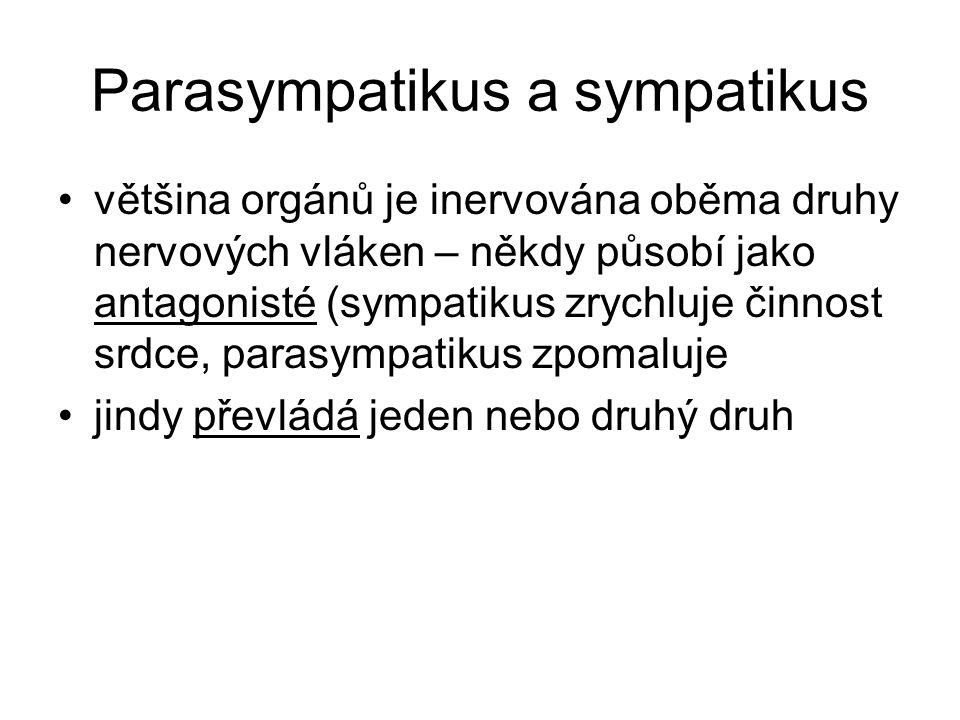 Parasympatikus a sympatikus většina orgánů je inervována oběma druhy nervových vláken – někdy působí jako antagonisté (sympatikus zrychluje činnost sr