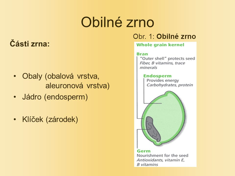 Obilné zrno Části zrna: Obaly (obalová vrstva, aleuronová vrstva) Jádro (endosperm) Klíček (zárodek) Obr.