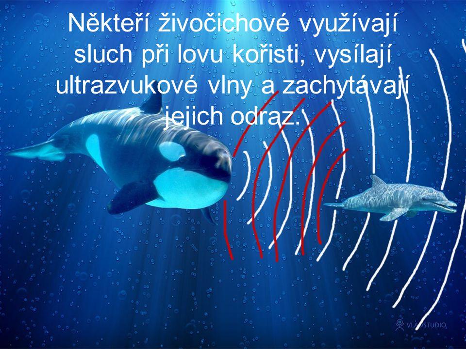 Někteří živočichové využívají sluch při lovu kořisti, vysílají ultrazvukové vlny a zachytávají jejich odraz.