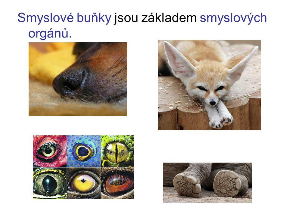 Noční živočichové mají větší oči a lepší černobílé vidění.