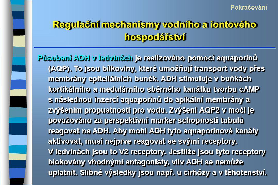 Regulační mechanismy vodního a iontového hospodářství Pokračování Působení ADH v ledvinách je realizováno pomocí aquaporinů (AQP). To jsou bílkoviny,