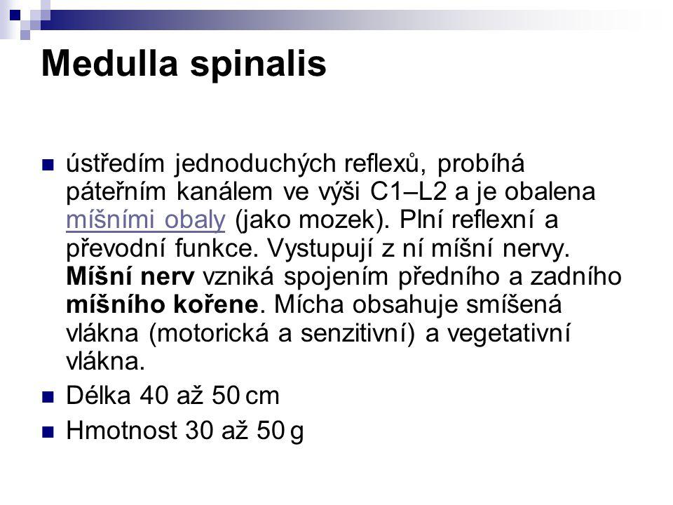Medulla spinalis ústředím jednoduchých reflexů, probíhá páteřním kanálem ve výši C1–L2 a je obalena míšními obaly (jako mozek). Plní reflexní a převod