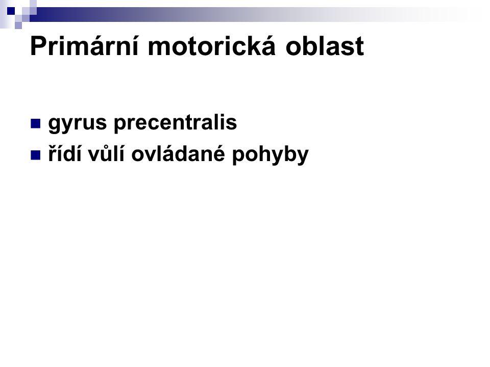 Primární motorická oblast gyrus precentralis řídí vůlí ovládané pohyby