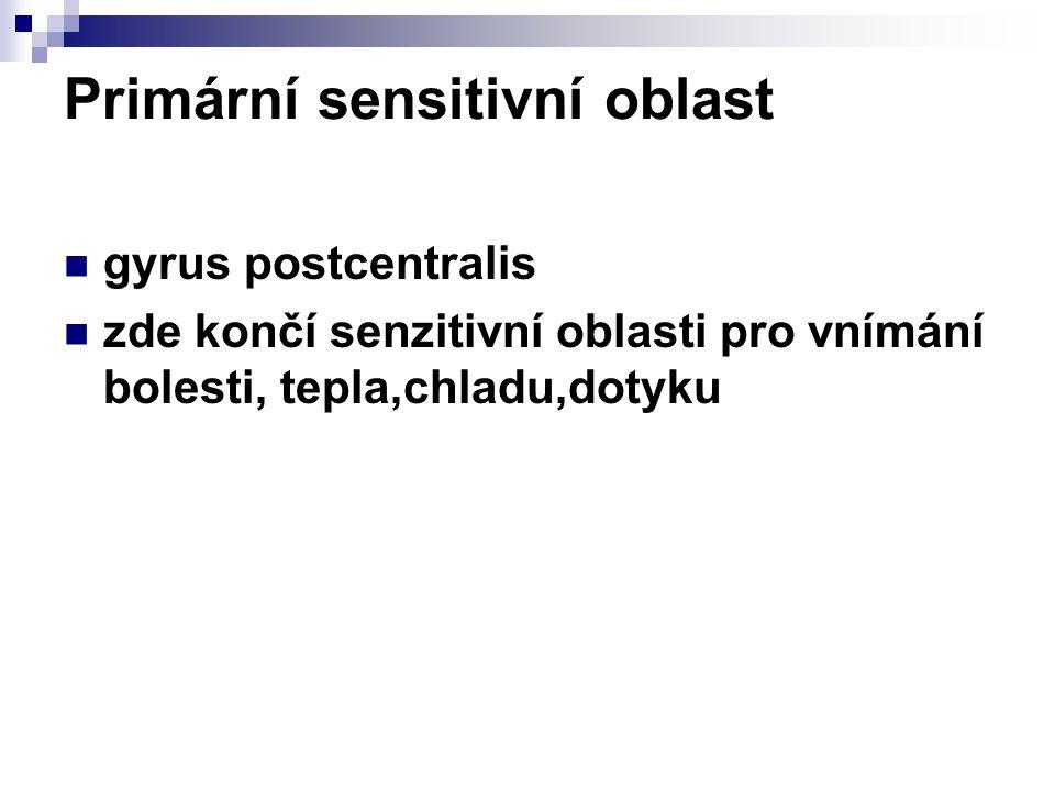Primární sensitivní oblast gyrus postcentralis zde končí senzitivní oblasti pro vnímání bolesti, tepla,chladu,dotyku