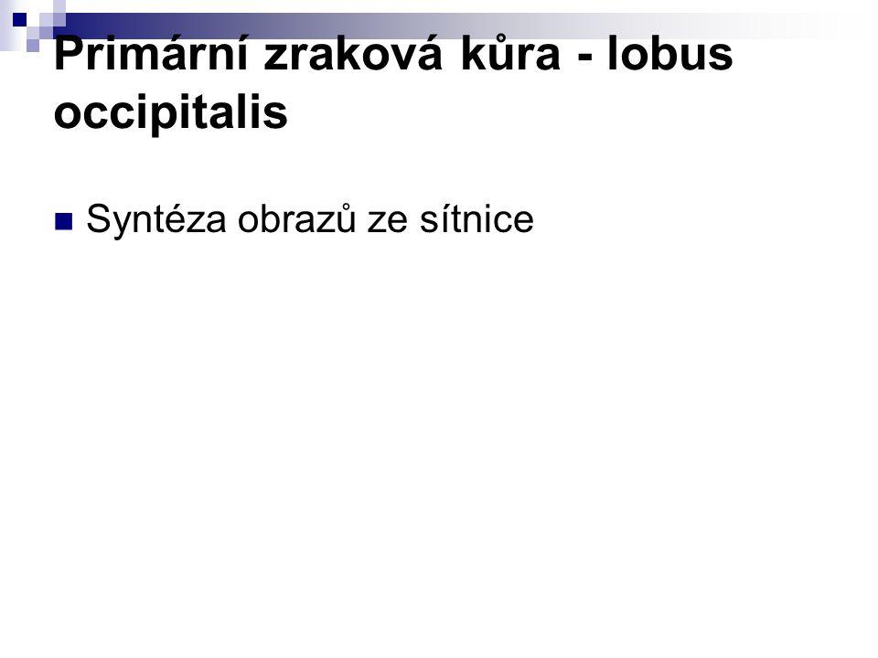 Primární zraková kůra - lobus occipitalis Syntéza obrazů ze sítnice