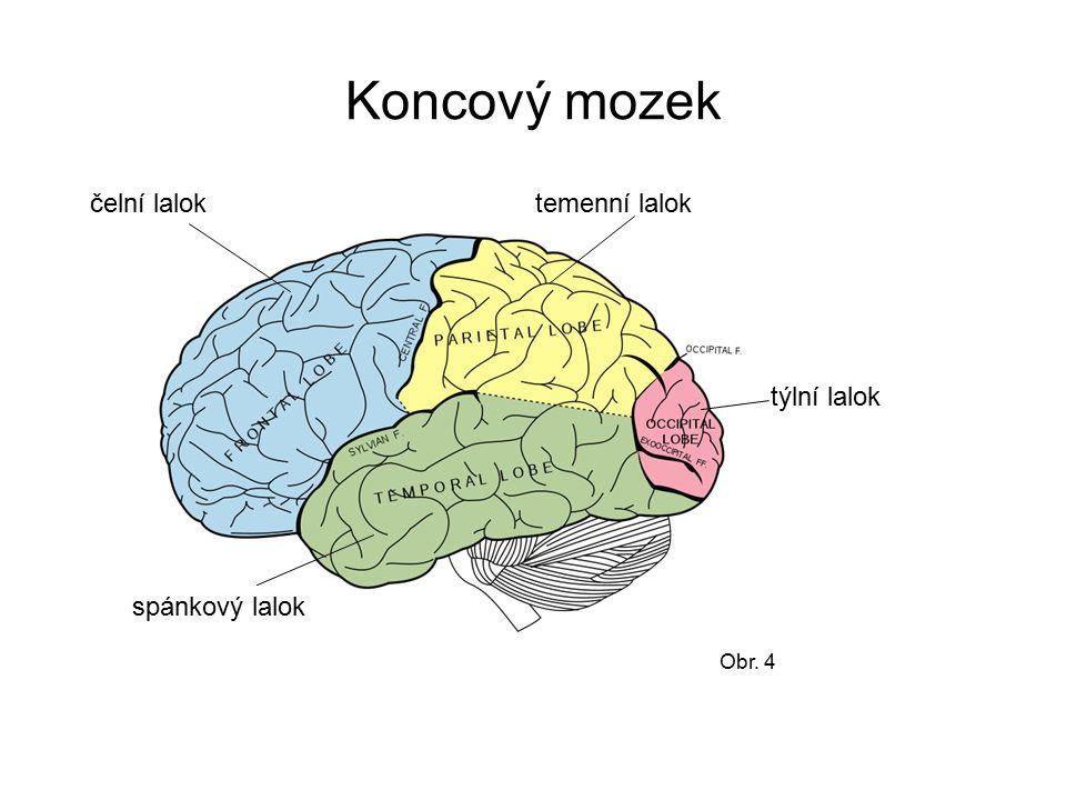 Koncový mozek Obr. 4 temenní lalokčelní lalok týlní lalok spánkový lalok