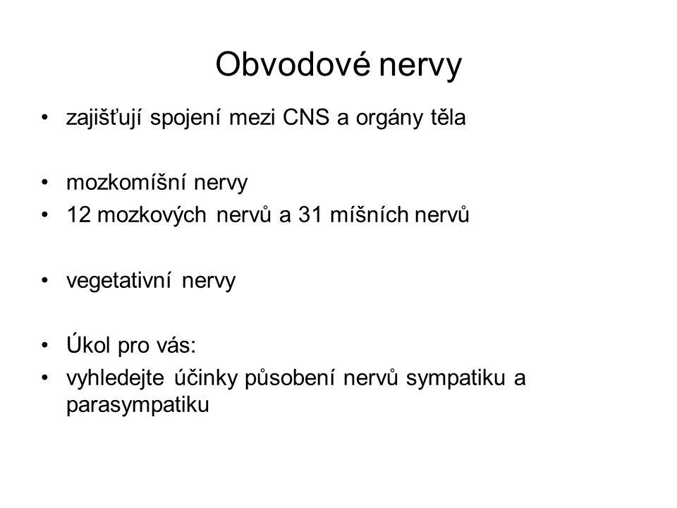 Obvodové nervy zajišťují spojení mezi CNS a orgány těla mozkomíšní nervy 12 mozkových nervů a 31 míšních nervů vegetativní nervy Úkol pro vás: vyhlede