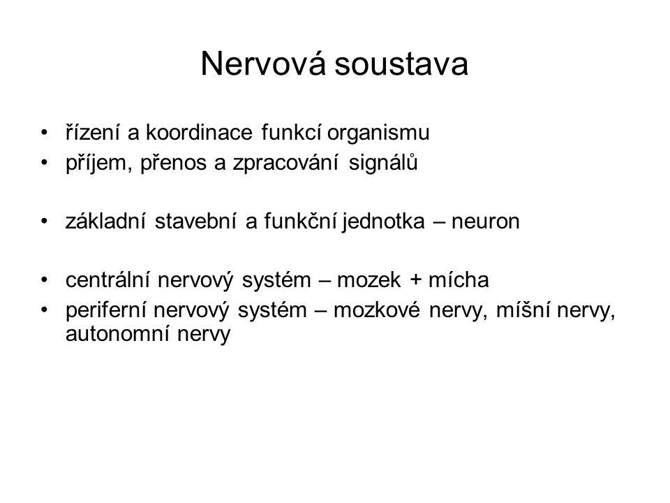 Nervová soustava řízení a koordinace funkcí organismu příjem, přenos a zpracování signálů základní stavební a funkční jednotka – neuron centrální nerv