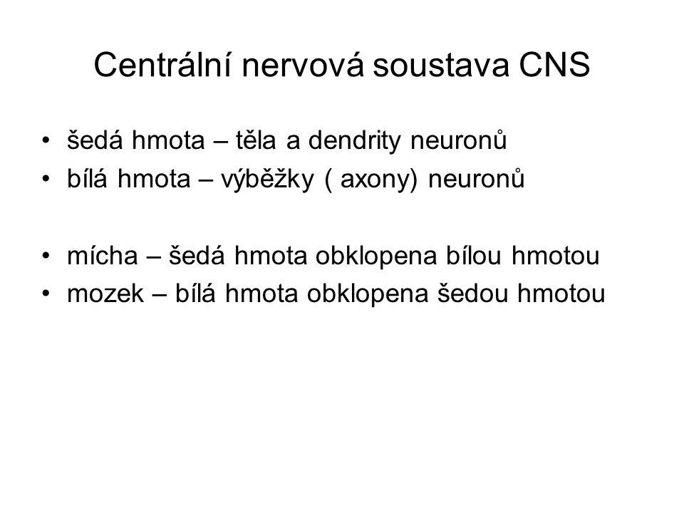 Centrální nervová soustava CNS šedá hmota – těla a dendrity neuronů bílá hmota – výběžky ( axony) neuronů mícha – šedá hmota obklopena bílou hmotou mo