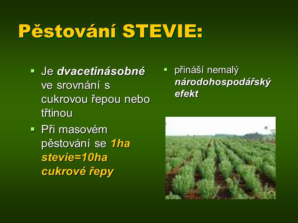 Pěstování STEVIE:  přináší nemalý národohospodářský efekt  Je dvacetinásobné ve srovnání s cukrovou řepou nebo třtinou  Při masovém pěstování se 1h