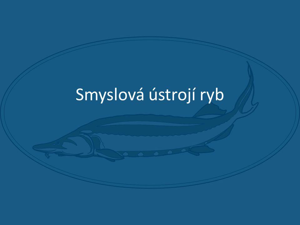 Smyslová ústrojí ryb