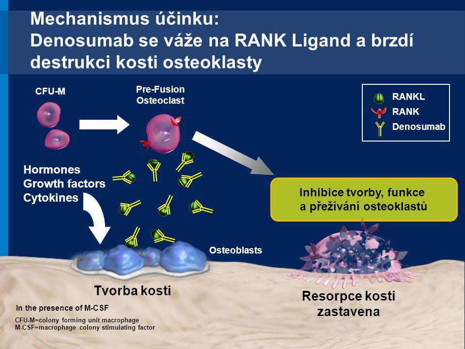 Mechanismus účinku: Denosumab se váže na RANK Ligand a brzdí destrukci kosti osteoklasty RANKL RANK Denosumab Tvorba kosti Hormones Growth factors Cyt