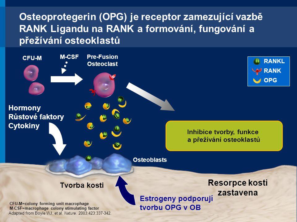 Osteoprotegerin (OPG) je receptor zamezující vazbě RANK Ligandu na RANK a formování, fungování a přežívání osteoklastů Hormony Růstové faktory Cytokin