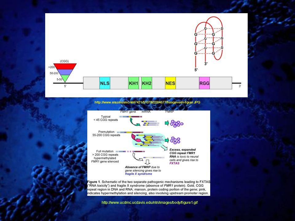 http://www.erasmusmc.nl/47421/51019/2004677/hoogeveen-figuur.JPG http://www.ucdmc.ucdavis.edu/ntri/images/body/figure1.gif