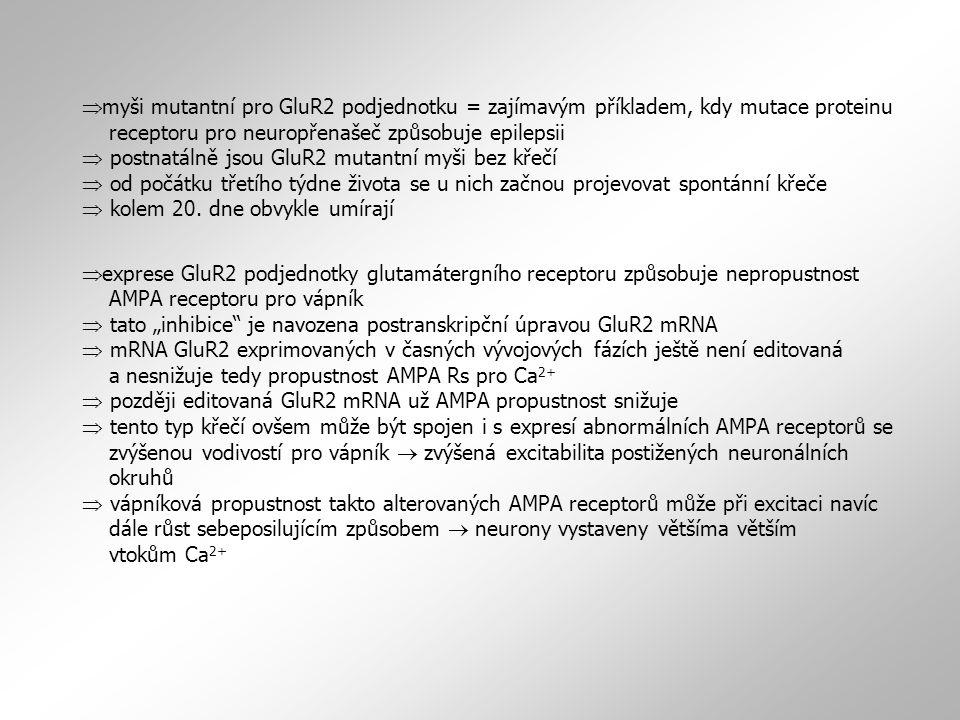  myši mutantní pro GluR2 podjednotku = zajímavým příkladem, kdy mutace proteinu receptoru pro neuropřenašeč způsobuje epilepsii  postnatálně jsou Gl