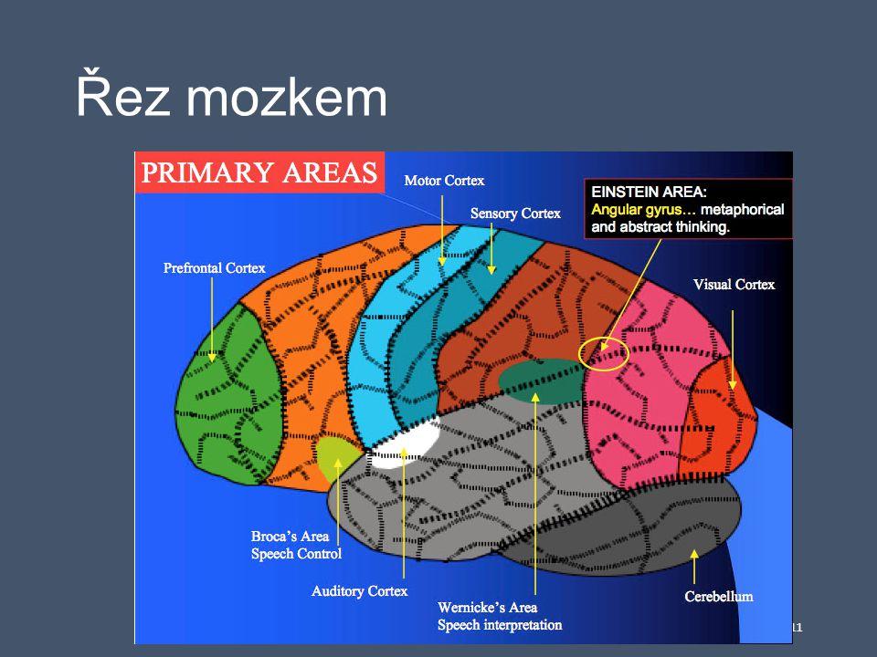 Řez mozkem 11