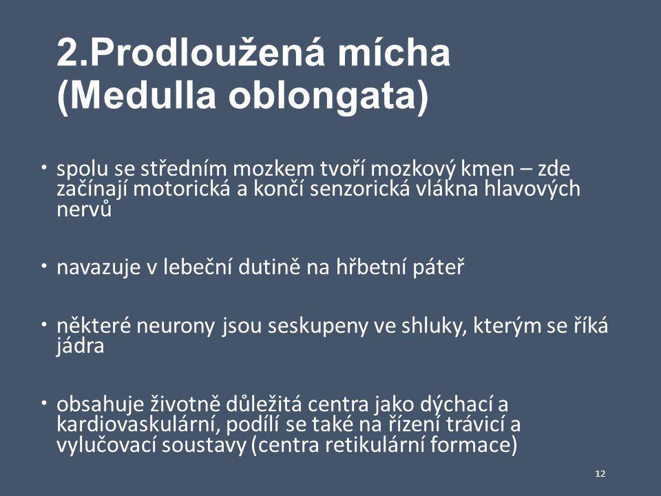 2.Prodloužená mícha (Medulla oblongata)  spolu se středním mozkem tvoří mozkový kmen – zde začínají motorická a končí senzorická vlákna hlavových ner