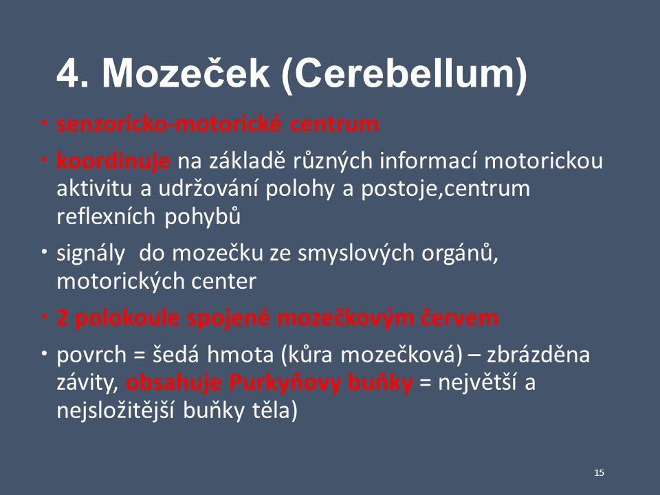 4. Mozeček (Cerebellum)  senzoricko-motorické centrum  koordinuje na základě různých informací motorickou aktivitu a udržování polohy a postoje,cent
