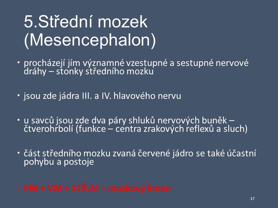 5.Střední mozek (Mesencephalon)  procházejí jím významné vzestupné a sestupné nervové dráhy – stonky středního mozku  jsou zde jádra III. a IV. hlav