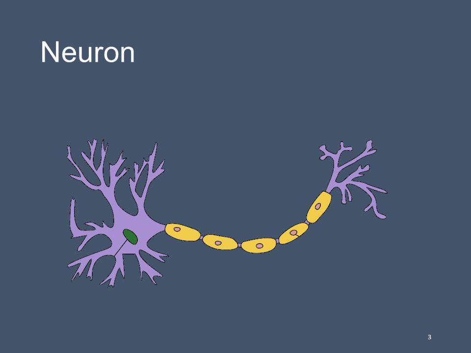 Rozlišena na : 1.CNS (centrální, ústřední) – mozek,páteřní mícha 2.