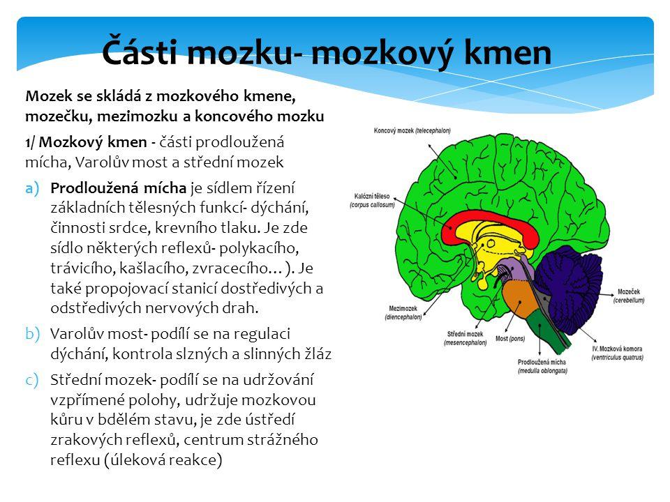 Mozek se skládá z mozkového kmene, mozečku, mezimozku a koncového mozku 1/ Mozkový kmen - části prodloužená mícha, Varolův most a střední mozek a)Prod